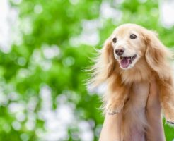 老犬の夏バテは5月も!乗り切るための対策や工夫の仕方